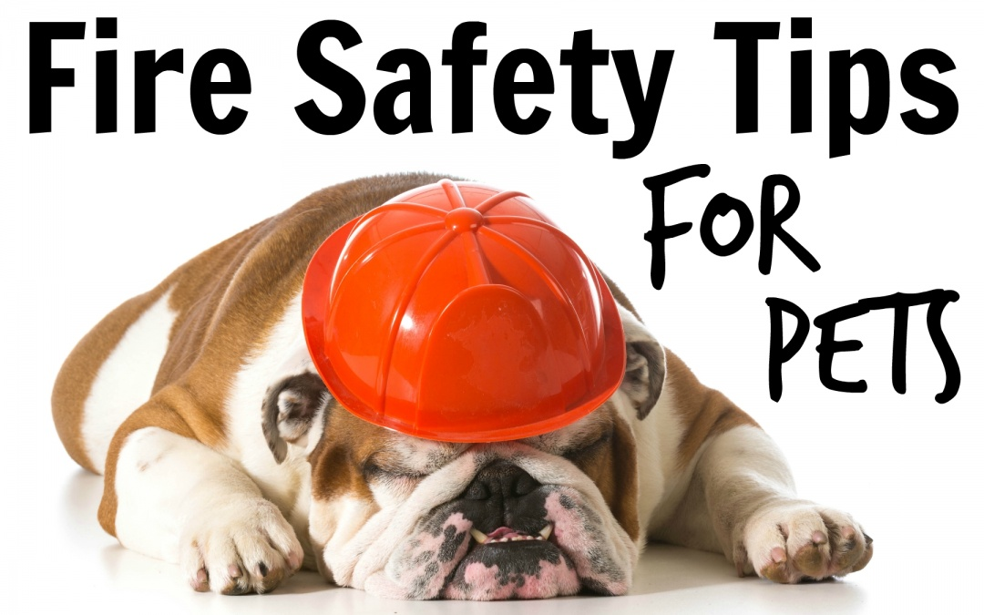 January Week 3 – Pet Fire Safety